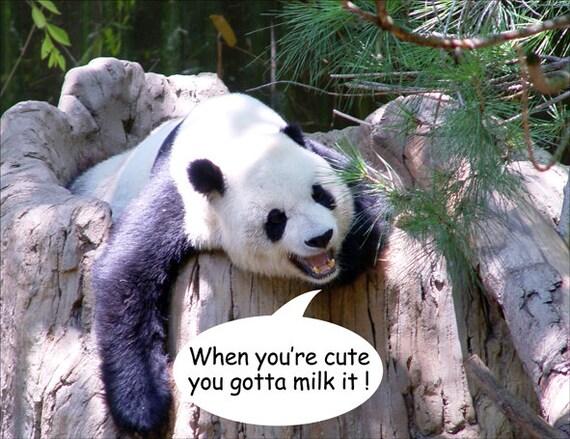 panda fridge mag  7cm by 4 5cm when you re cute you