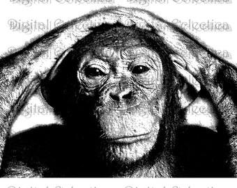 Chimpanzee Engraving. Chimp PNG. Chimpanzee Prints. Chimpanzee Images. Chimp Pictures. Chimpanzee Art. Chimpanzee Clipart. No. 0030.