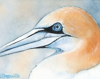 5x7 Northern Gannet print of watercolor painting