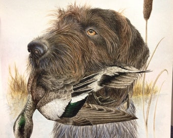 Drahthaar dog painting: drahthaar watercolor print duck hunting art 9x12""