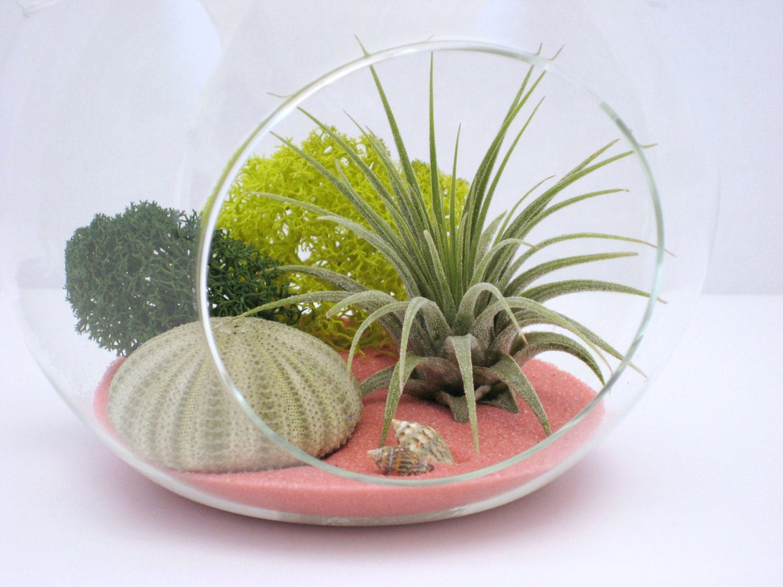 air plant terrarium kit pink and green hanging terrarium. Black Bedroom Furniture Sets. Home Design Ideas