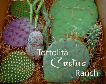Cactus Cutting Variety Box Sonoran Desert Succulents Gift