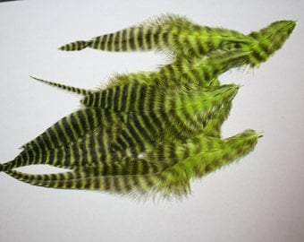 """Rooster feathers grizzly, green and black, 3-7"""", 13"""