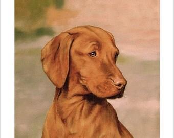 Hungarian Vizsla Dog Portrait. Ltd Edition Print. Personally signed and numbered by award Winning Professional artist JOHN SILVER. jsfa011