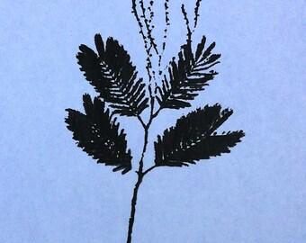 Silk Screen - Medium - Jane's Acacia