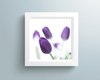 Extra large Art Print Spring Flower - Purple Tulips Photography - Flower Photography - Nature Photo - Modern Art - Minimalist photography