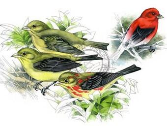 Scarlet Tanagers - bird art, wildlife art - nature print of original artwork