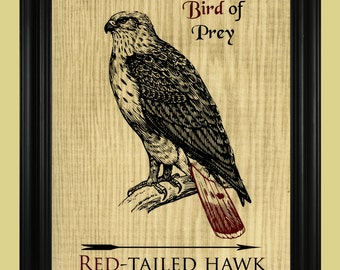 Red Tailed Hawk Print, Bird of Prey Poster, Detailed Hawk Illustration, Rustic Outdoorsy Art