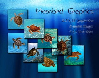 Turtles Images – 8 Square Art Images Digital Collage Sheet – 4 x 4 inches -  Printable Download for making coasters and cards