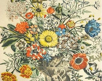Botanical Art Print, November