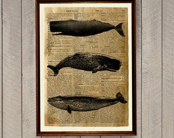 Beach decor Nautical decor Whale poster Sea life print WA51