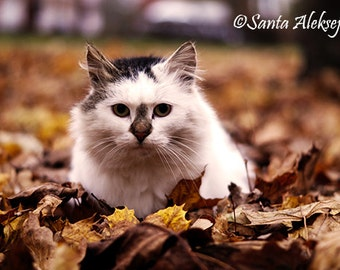 Cat photography - Fine Art Photography - photography download, instant download, cat photo, animal photography, Wall decor, autumn foto