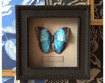 Mayflies - Number 25