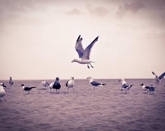 Circle of Seagulls in Brighton Beach Print or Canvas