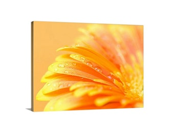 Floral canvas print. Orange flower petals macro photography canvas gallery wrap. Water drops floral photography. Fine art print