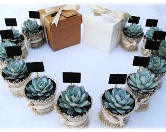 12 Succulent Wedding Favors - Succulent Bridal Shower Favors - DIY Succulent Kits - Burlap Bridal Shower Favor - 12 Plant Kits
