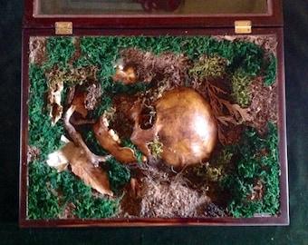 """Macabre Case Sculpture by Nibz - """"Remains"""" Weird Horror Art Sculpture"""