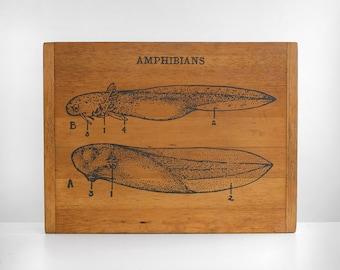 original pencil drawing, tadpole drawing, original natural history drawing, antique bread board, bread board