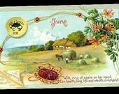 June Birth Date Flower Tucks 1907 Postcard