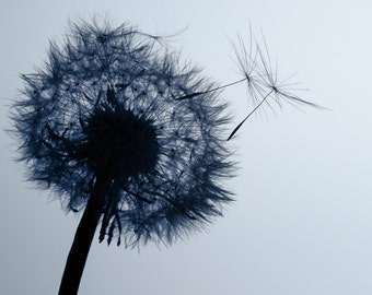 Seed Head Photography, Dandelion Photo, Blue Nursery Decor, Make a Wish