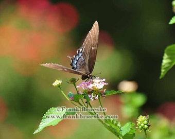 Fine Art Photography; Flittering Butterfly, Fine Art Prints