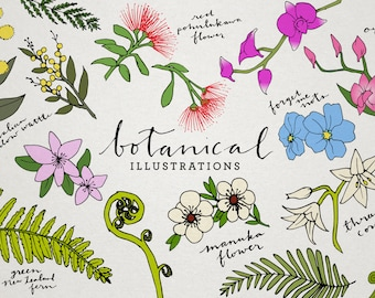 Botanical Clip Art - floral illustrations, tropical flowers clipart, New Zealand plants, orchids, ferns, lilies, flora and fauna, leaves
