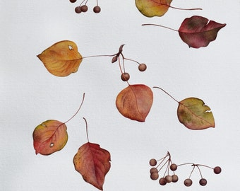 Wild Pear Leafs Botanical Watercolor Painting Fine Art Print