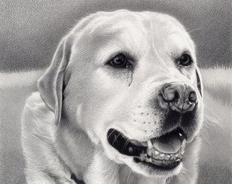 Labrador - Mounted print of original pencil drawing