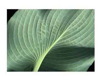 Hosta Greeting Card - Blank Inside