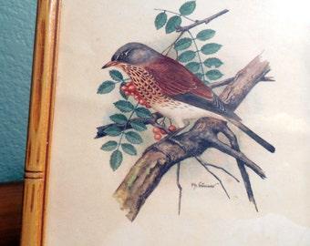 Vintage Picture of Bird Mid-Century Frame Audubon