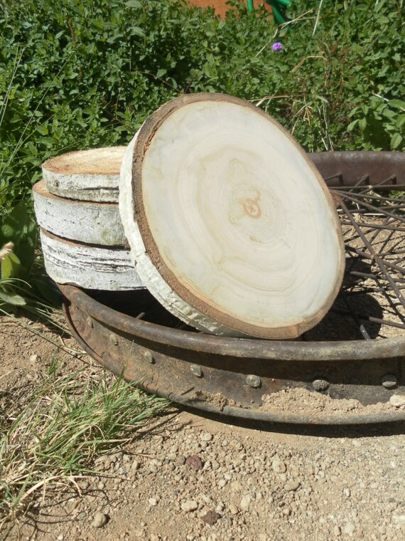 Large aspen tree slices 9 10 inch 1 5 inch thick rustic for Large tree trunk slices