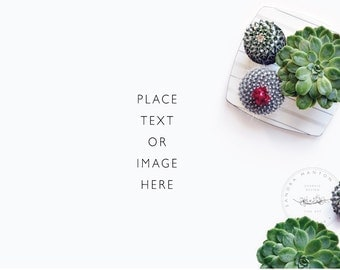 Styled Desktop | Succulents | Styled Photography