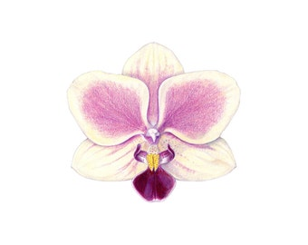 Orchid print / Orchid drawing / colored pencil drawing