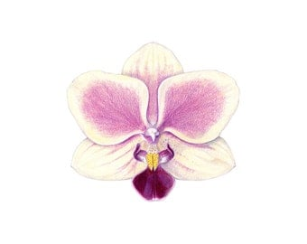 orchid print orchid drawing colored pencil drawing us 9 00 ...: https://www.etsy.com/search?q=orchid+drawing