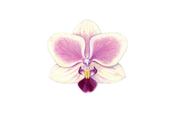 Dessin imprimer orchid e orchid e dessin au crayon de - Dessin d orchidee ...
