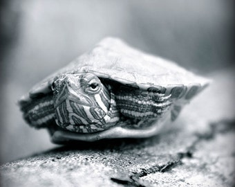 Turtle photography, baby turtle art, animal art, black and white photography, nature art print, small creature photography, Turtle Tot