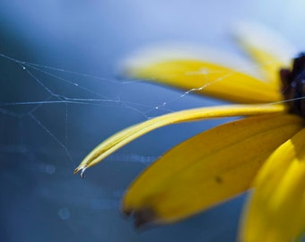 Macro Photography, Nature, Flower, Web, Color, Yellow, Blue, Art