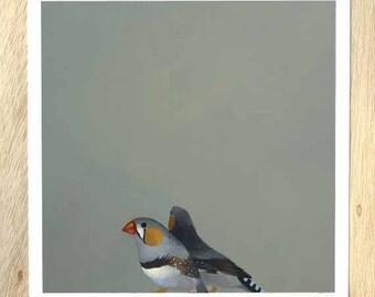 Gender-Specific Flavors Of Froyo 12 x 12 Art Print - Bird - Zebra Finch - Animal - Gift - Giclee