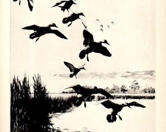 "1930s ""Evening"" No.31  Richard Bishop Duck Wildlife Art Vintage Print , Birds Duck Hunting Wildlife Art Natural History"