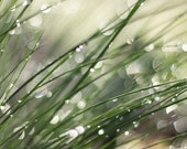 Joy Comes in the Morning ... Morning Dew on Grass (color photograph, various sizes)