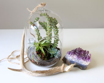 Modern Succulent and Tillandsia Terrarium // Indoor Garden // Living Home Decor, tillandsia, airplants, succulents, aerium, eco, gift