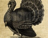 INSTANT DOWNLOAD - Thanksgiving Clip Art Turkey Illustration - Download and Print - Image Transfer Digital Sheet by Room29 - Sheet no. 1228