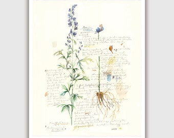 Aconite botanical print, Plant poster, Blue Flower print, Medicinal herb artwork, Watercolor flowers, Botanical art, Garden, Floral painting