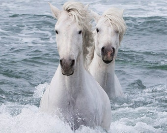 Sea Horse Twins - Fine Art Horse Photograph - Horse - Camargue - Ocean
