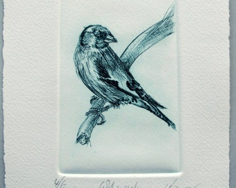 Goldfinch Bird print. Drypoint. Limited Edition.