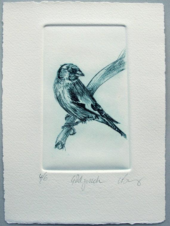 Goldfinch Bird print. Drypoint. Limited Edition.