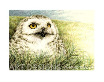 ACEO Owl Art Print, Field Owl in Grass, Archival Print, SFA Small Format Art, Owl Pastel Art, Artist Trading Card, Bird Drawing, ADA-P330