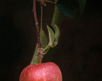 apple photograph, apple print, fruit print, fruit photography, red, kitchen wall art, autumn decor, fall art