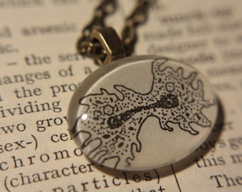 Cell Division Necklace - Amoeba Necklace