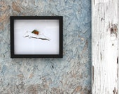Pigs Fly with real butterfly wings - choice of size - conservation art - frame made by USA disabled veteran